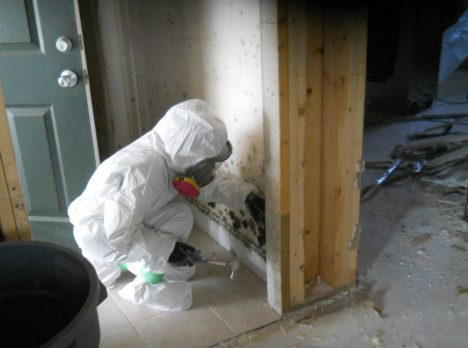 Certified Mold Remediation Techs and Property Restoration Services